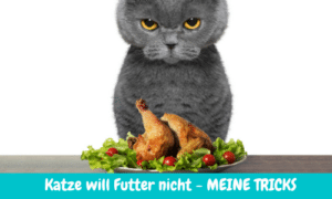 Read more about the article Katze frisst Futter nicht – Meine top Tipps