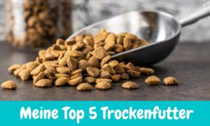 Meine Top 5 – Bestes Trockenfutter für Katzen