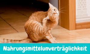 Read more about the article Nahrungsmittelunverträglichkeit bei Katzen