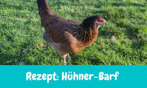 Rezept – Hühner Barf