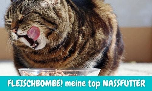 Gutes Nassfutter für Katzen – MEINE TOP 3