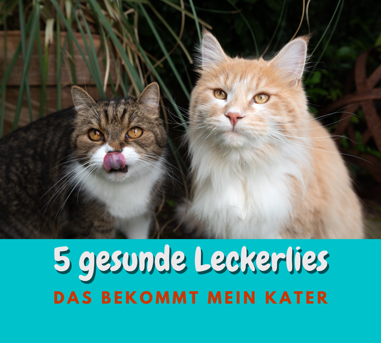Read more about the article 5 Gesunde Katzen Leckerlies