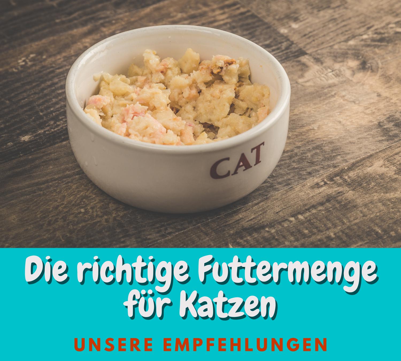 Read more about the article Die empfohlene Futtermenge für Katzen