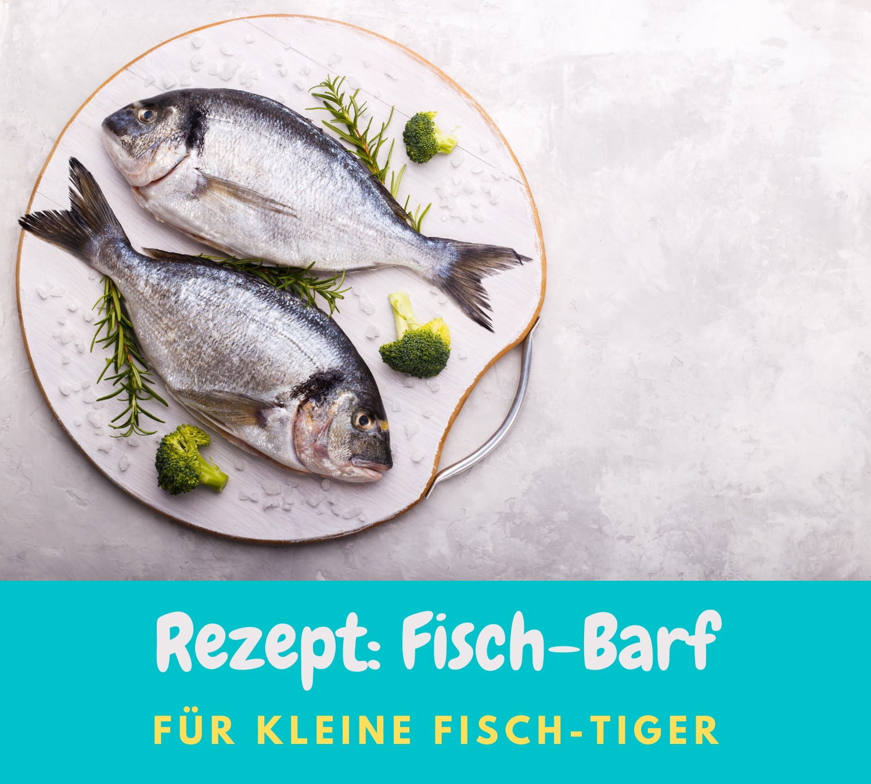 Read more about the article Für Fischliebhaber | Barfrezepte  2021| Rezept: Fisch-Barf