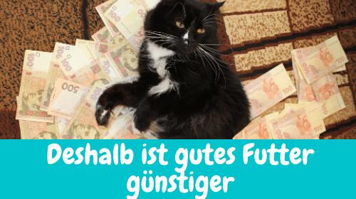 Read more about the article Deshalb ist gutes Katzenfutter günstiger