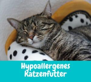 Hypoallergenes Katzenfutter – Das musst du wissen
