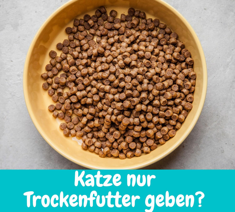 Read more about the article Katze nur Trockenfutter füttern – Deshalb solltest du damit aufhören