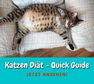 Katzen Diät – Die wichtigsten Dinge