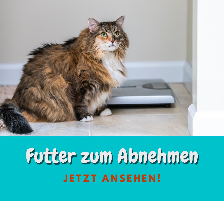 Read more about the article Futter zum Abnehmen – Es hat sich ausgemoppelt