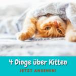 4 Dinge über Kitten-Ernährung