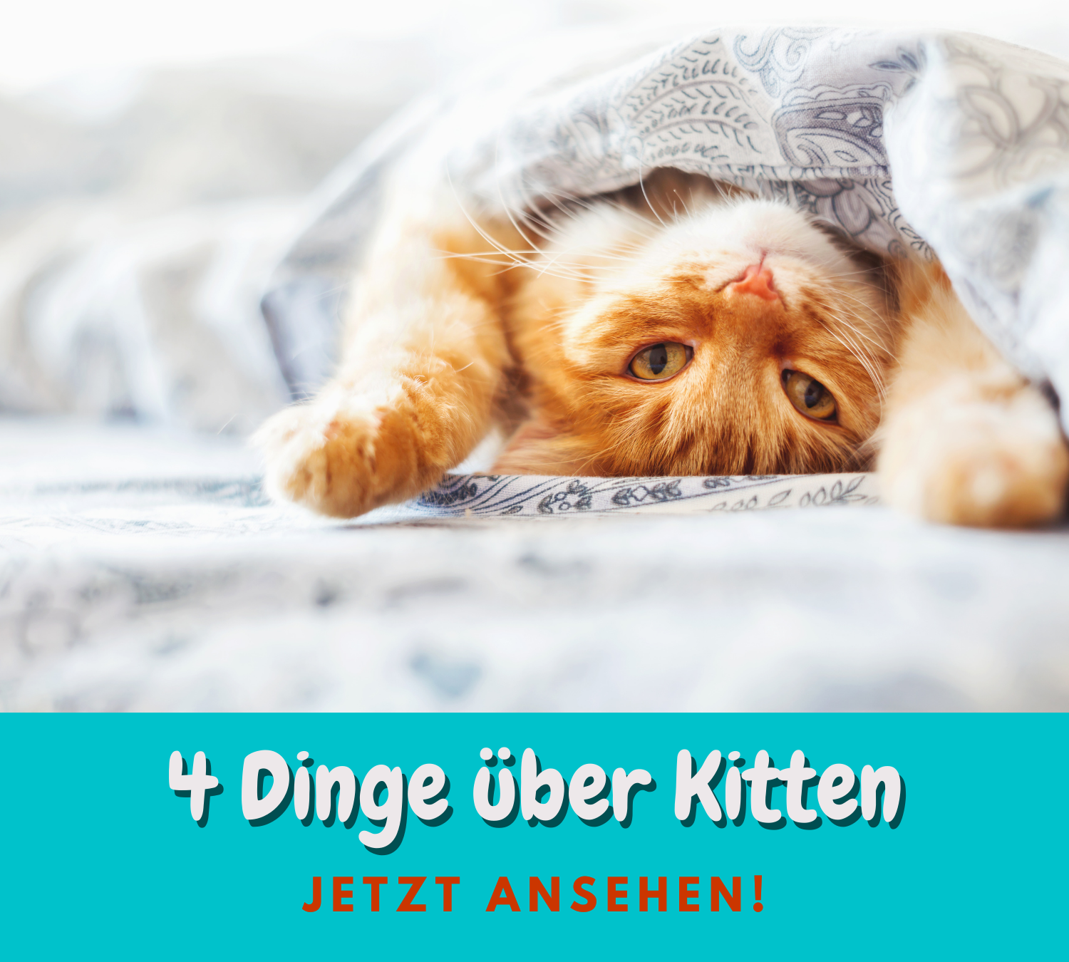 Read more about the article 4 Dinge über Kitten-Ernährung
