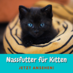 3 gute Nassfutter für Kitten