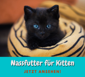Read more about the article 3 gute Nassfutter für Kitten